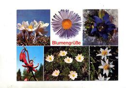 Carte Fleur Alpine Flamme Nauders - Fleurs