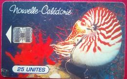 25 Units Shell - Nouvelle-Calédonie