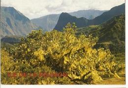 CPM,Réunion , N°1026, Océan Indien , Cirque De Cilaos ,Ed. Beaujet 1992 - Reunion