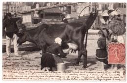 Berck-Plage - Laitière Sur La Plage - édit. LL. Lévy 119 + Verso - Berck