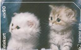 Norway, N256, Katter, Cats, 2 Scans. - Noorwegen