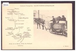 ST PIERRE ET MIQUELON - CARTE DE L'ILE - ATTELAGE - CARTE NON CIRCULEE - TB - Saint-Pierre-et-Miquelon