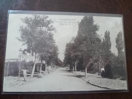LAMBERSART-   Avenue Des Acacias        édit: L.P. - Lambersart