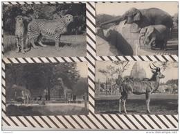 3AD1099 Zoo PARC ZOOLOGIQUE DU BOIS DE VINCENNES Lot De 16 Cartes 8  SCANS - Vincennes