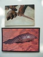 Lot De 2 Cartes Postales / Animal Le Pangolin - Animaux & Faune
