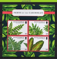 Nff253 FLORA VARENS PLANTEN FERNS PLANTS FARNE PFLANZEN MONTSERRAT 2012 ONG/MH - Pflanzen Und Botanik