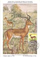 ANGOLA POST CARD MAXIMUM 1955  FAUNA  (MAGG20219) - Angola