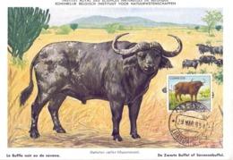 ANGOLA POST CARD MAXIMUM 1954  FAUNA  (MAGG20220) - Angola