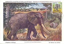 ANGOLA POST CARD MAXIMUM 1954  FAUNA  (MAGG20221) - Angola