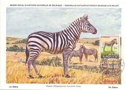 ANGOLA POST CARD MAXIMUM 1954  FAUNA  (MAGG20222) - Angola