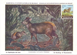 ANGOLA POST CARD MAXIMUM 1954  FAUNA  (MAGG20224) - Angola