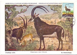 ANGOLA POST CARD MAXIMUM 1954  FAUNA  (MAGG20225) - Angola