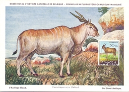 ANGOLA POST CARD MAXIMUM 1954  FAUNA  (MAGG20226) - Angola