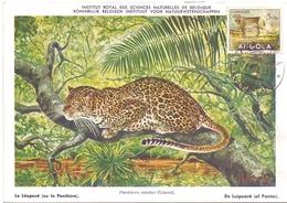 ANGOLA POST CARD MAXIMUM 1954  FAUNA  (MAGG20227) - Angola