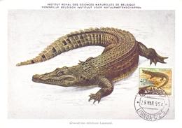 ANGOLA POST CARD MAXIMUM 1954  FAUNA  (MAGG20228) - Angola