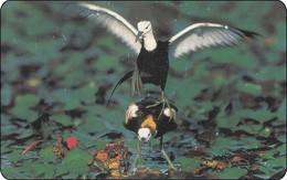 Taiwan Chip Phonecard Bird Vogel - Taiwan (Formosa)