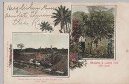 (72597) AK Panama, Schaufelbagger I.d. Kanal Zone, Kakaobaum, Bis 1905 - Postcards