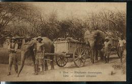 Carte Illustrée Neuve N° 19.  Vue 8 : UELE. -- Eléphants Domestiques . - Entiers Postaux