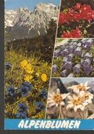 5k. FLORA Flowers Alpenblumen In Austria Alpenflora Stengelloser Enzian Alpenrose Glockenblume Edelweiss Signed In 1978 - Medicinal Plants