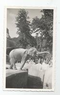 Photographie Zoo éléphant Photo 7x11,5 Cm - Lieux