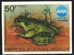 MADAGASCAR (1975) Frog. Rana Subaspera Barbour. Imperforate. Scott No 534, Yvert No 569. - Madagascar (1960-...)