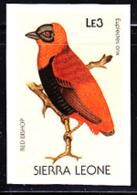 SIERRA LEONE (1988) Red Bishop (Euplectes Orix). Imperforate Proof. Scott No 975, Yvert No 894. - Sierra Leone (1961-...)