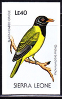 SIERRA LEONE (1988) Black-headed Oriole (Oriolus Brachychynchus). Imperforate Proof. Scott No 982, Yvert No 905. - Sierra Leone (1961-...)