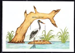 SIERRA LEONE (1988) Saddleback Stork (Ephippiorhynchus Senegalensis. Imperforate Proof Of S/S. Scott No 983. - Sierra Leone (1961-...)