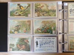 (1) Belgie, Frans, S651, Reeks Van 6, Wereld Der Vogels. - Liebig