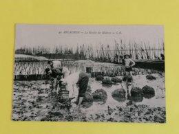 33 ARCACHON-LA RECOLTE DES HUITRES - Arcachon