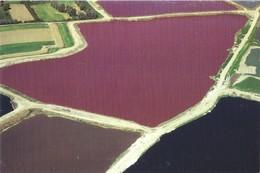 62 LILLERS - Bassins De Décantation De Sucrerie - Lillers