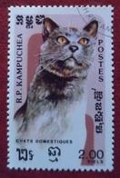 Chat (Animaux) - Kampuchea - 1985 - Kampuchea