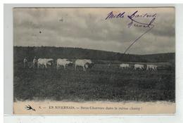 58 NEVERS #10494 EN NIVERNAIS 2 CHARRUES DANS LE CHAMP ATTELAGE DE BOEUFS HERSE AGRICULTURE PAYSANS N° 8 - Nevers