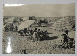 VENEZIA - Chioggia - 1951 - Saluti Da Sottomarina - Spiaggia - Chioggia