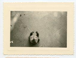 Snapshot Perspective Pov Zoo Unusual Curiosité Ours Bear Etrange Vue En Plongée Cadrage Surrealisme Oblique - Persone Anonimi