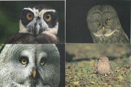 694; HIBOUX & CHOUETTES - Pájaros