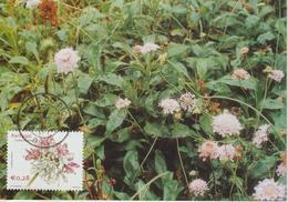 Acores Carte Maximum 2002 Fleurs 474 - Açores