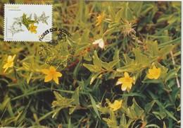Acores Carte Maximum 2002 Fleurs 477 - Açores