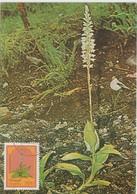 Madère Carte Maximum 1982 Fleurs 83 - Madère