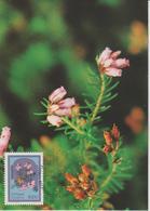 Madère Carte Maximum 1983 Fleurs 92 - Madeira