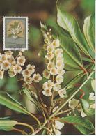 Madère Carte Maximum 1983 Fleurs 94 - Madeira