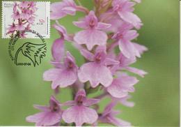 Madère Carte Maximum 2000 Fleurs 212 - Madeira