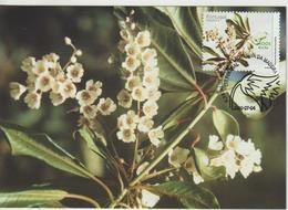 Madère Carte Maximum 2000 Fleurs 214 - Madeira