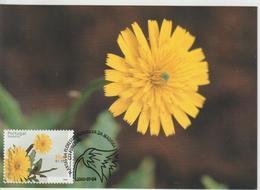 Madère Carte Maximum 2000 Fleurs 217 - Madeira