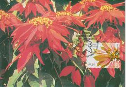 Madère Carte Maximum 2006 Fleurs 250 - Madeira