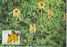 Madère Carte Maximum 2006 Fleurs 252 - Madeira