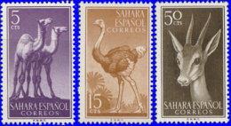 Sahara Espagnol 1957. ~ 120/22* - Faune - Sonstige - Afrika