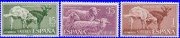 Sahara Espagnol 1962. ~ 198 à 200* - Journée Du Timbre - Sonstige - Afrika