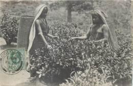 Ceylon - Sri Lanka - Coolie Woman Plucking Tea - Sri Lanka (Ceylon)