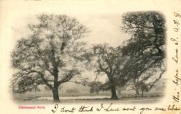 SURREY -  RICHMOND PARK 1904 Sur469 - Surrey
